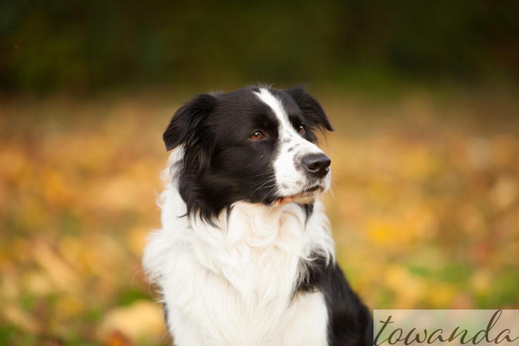 Therapiebegleithund, Tiergestütze Intervention, Physiotherapie